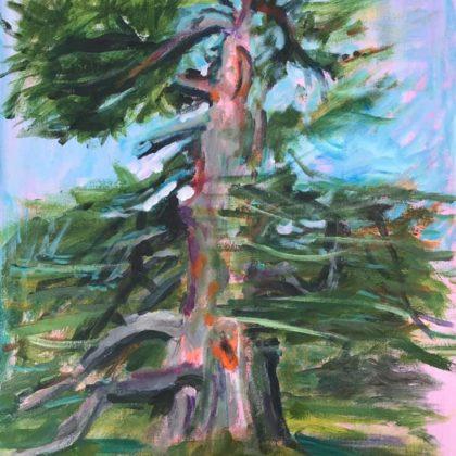 Griselda Mussett - Goodnestone Cedar -
