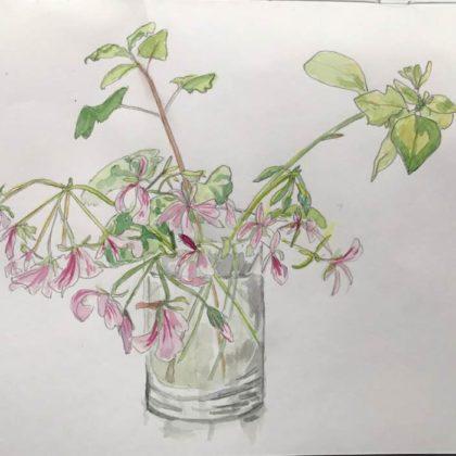 Griselda Mussett - Geraniums in water -