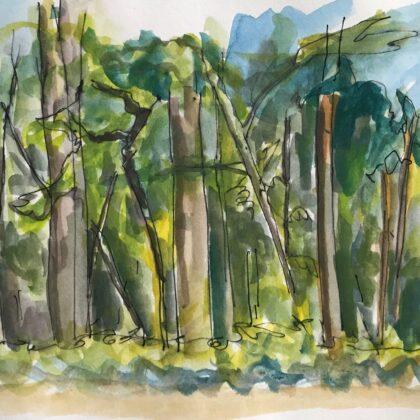 Griselda Mussett - Woods near Bignor, W Sussex -