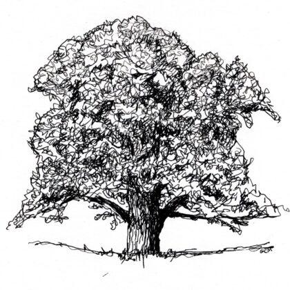 Griselda Mussett - Oak tree Commission -